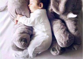 L'oreiller éléphant, à la fois peluche et coussin